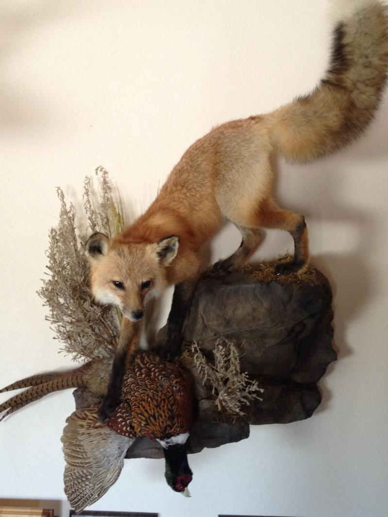 fox and pheasant mount